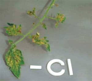 Chloride deficiency in plants