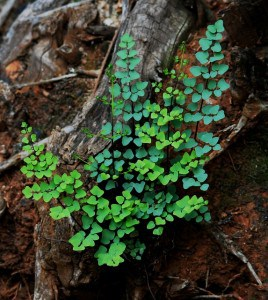 Fern growing on a log