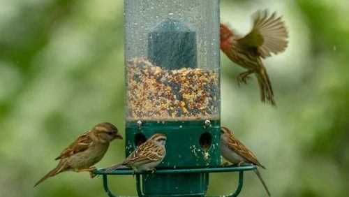 4 birds on a bird feeder