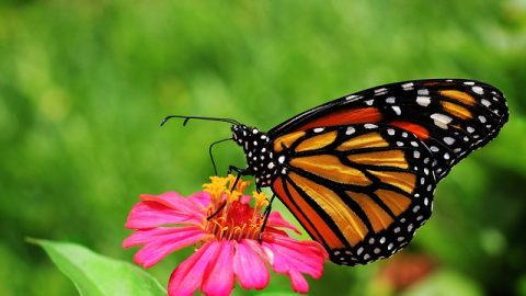 butterfly getting nectar from flower