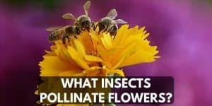 three honey bee's on flower