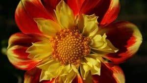a plant close up