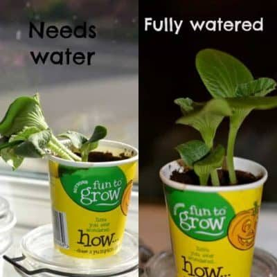 why-do-plants-need-water